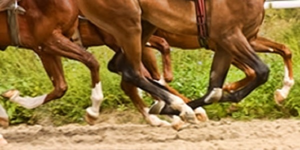 galileo racing pic