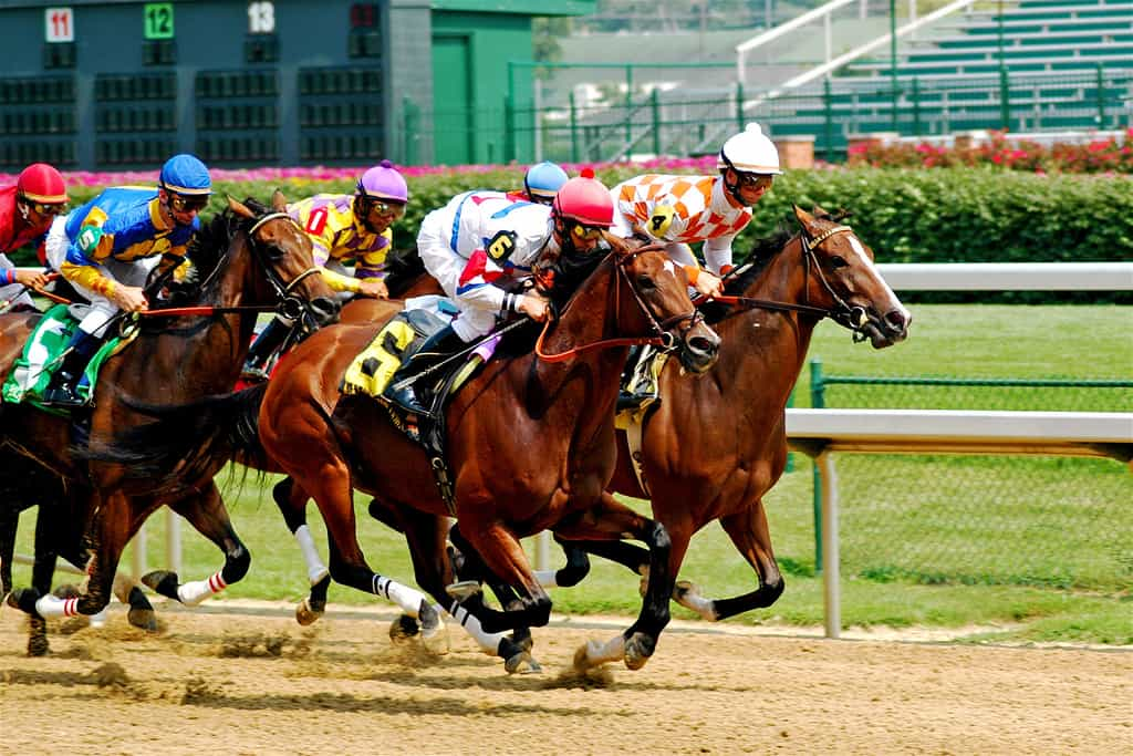 Trading software horse racing