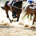 horses galloping through sand
