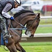 Dark Horses betting tips