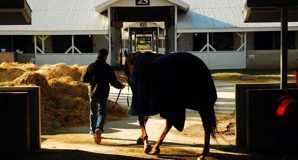 man leading horse from stable