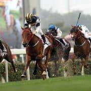 MK Horse Racing Tips