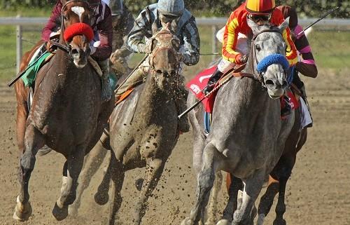 3 Horses Racing