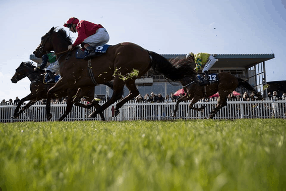 Commonwealth Cup Horse Race