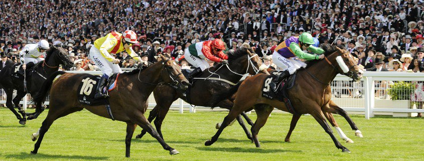 prohibit leads the field on his way to winning at ascot