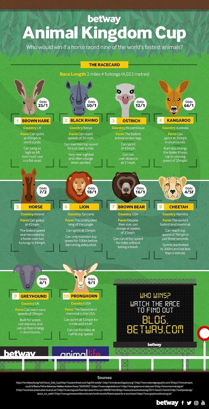 Animal Kingdom Cup Infographic
