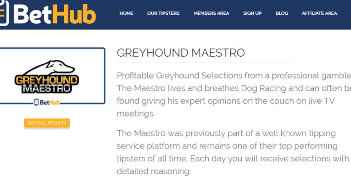 greyhound maestro pic