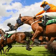 horse jumps