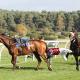 horse race fall