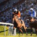 horse racing pic