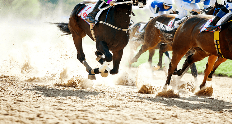Best Horse Racing Tips, What to Know - Honest Betting Reviews