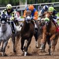 pick a winning horse